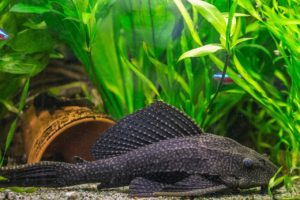 Aquarium Zierfische